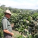 coffeeplantation_costarica011