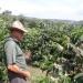 coffeeplantation_costarica011