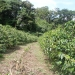 coffeeplantation_costarica012