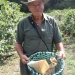 coffeeplantation_costarica016