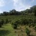 coffeeplantation_costarica019