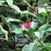 costa-rica_050212_5534
